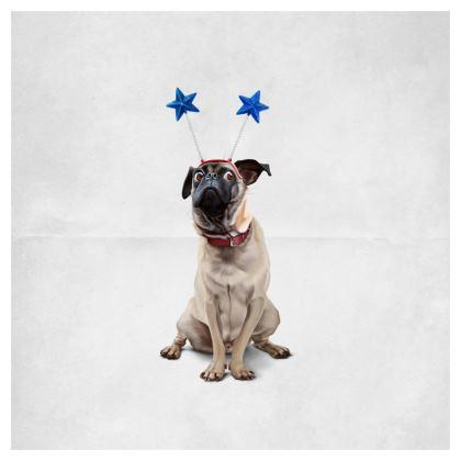 A Pug's Life ~ Wordless Animal Behaviour Cushion