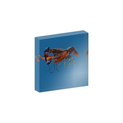 Calling Salvador ~ Colour Animal Behaviour Acrylic Block