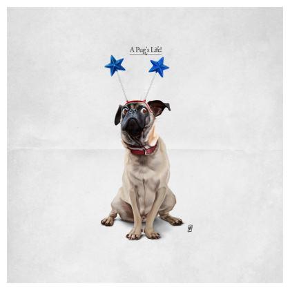 A Pug's Life ~ Title Animal Behaviour Cushion