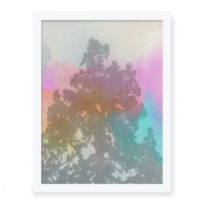 Framed Art Print- Pine Fog