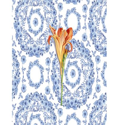 Blue Rhapsody Daylily Trays