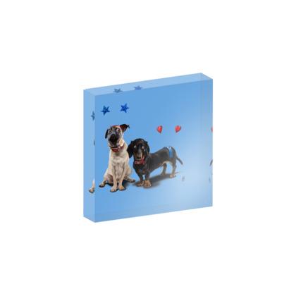What's the Deely? ~ Colour Animal Behaviour Acrylic Block