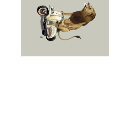 Lamb ~ Colour Animal Behaviour Art Postcard