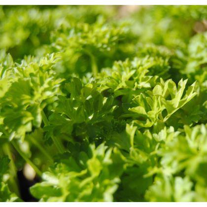 Men's Swimming Shorts - Coriander