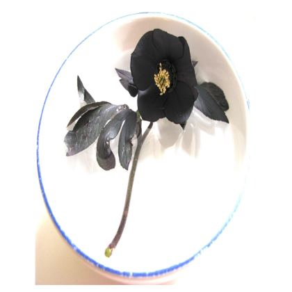 Trays - Hellebore 'Black Diamond'
