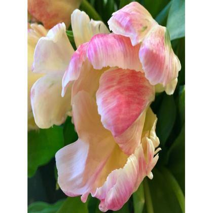 Trays - Roaring Tulip