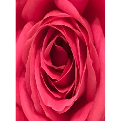 Trays - Rose 'Grand Dame'