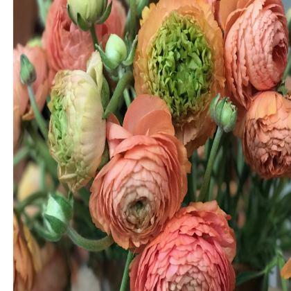 Trays - Apricot Ranunculus