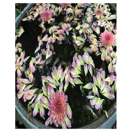 Trays - Floating Dahlias
