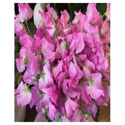 Trays - Cloud of Pink Sweet Peas