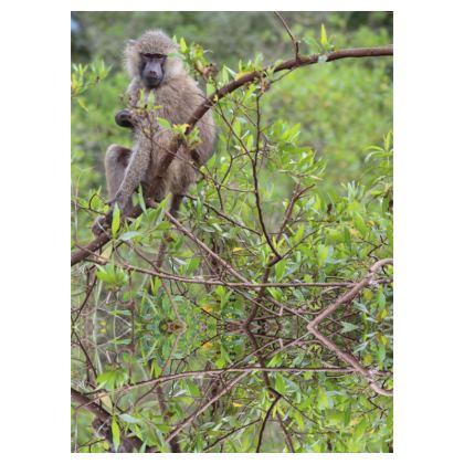 Chaussette Sage est le singe