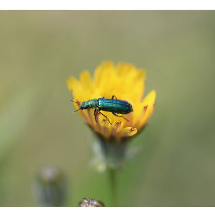 Set de table petit insecte bleu