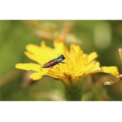 Set de table petit insecte irisé
