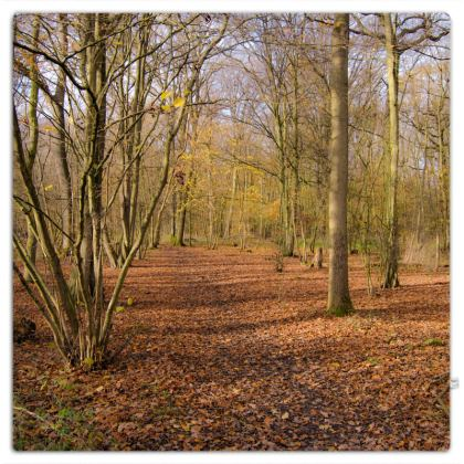 Picnic Blanket - Open Clearing in Clapham Woods