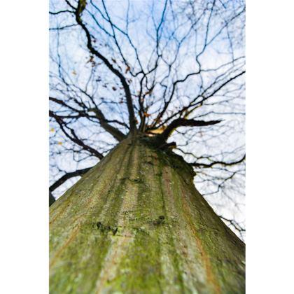 Towels - Vertical Tree