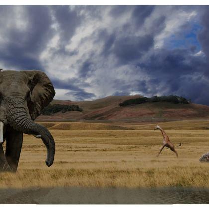 Socks - Savannah Wildlife