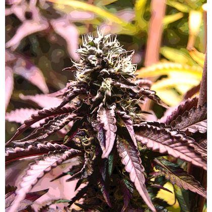 Kimono - Purple haze