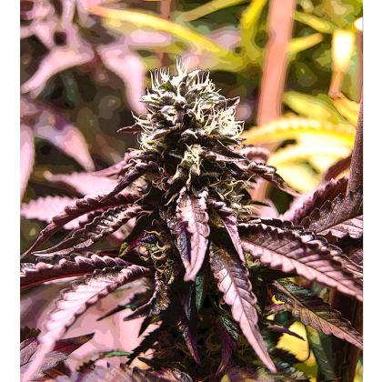 Kimono Jacket - Purple haze