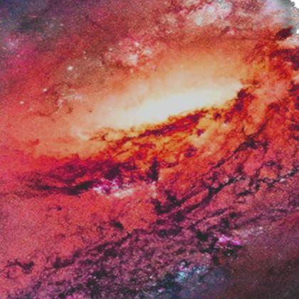 Socks - Tortoise Earth Full