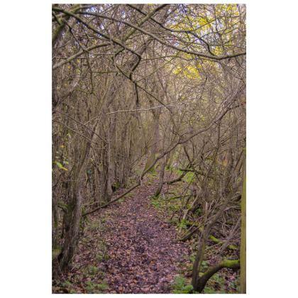 Socks - Trail in the Woods
