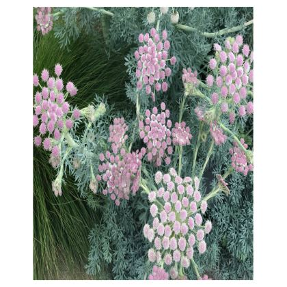 Trays - Moon Carrot