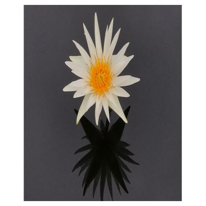 Trays - White Waterlily
