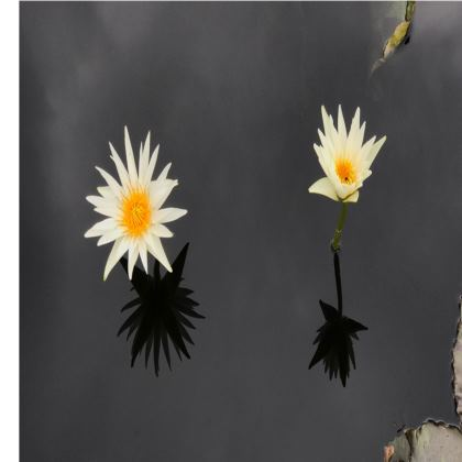 Trays - Lilies, Deep Water