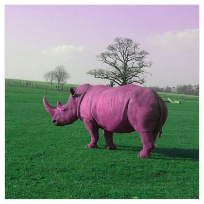 Voile Curtains - (229cmx229cm) - Pink Rhino