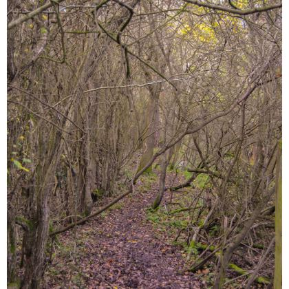Fabric Placemats - Trail in the woods