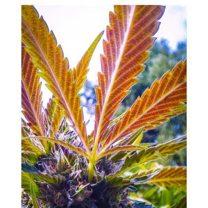 Colorful Cannabis Leaf Hoodie