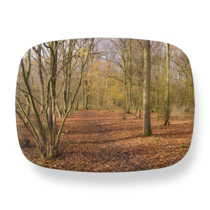 Lunch Box - Open Clearing in Clapham Woods