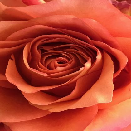 Trays - Bronze Rose