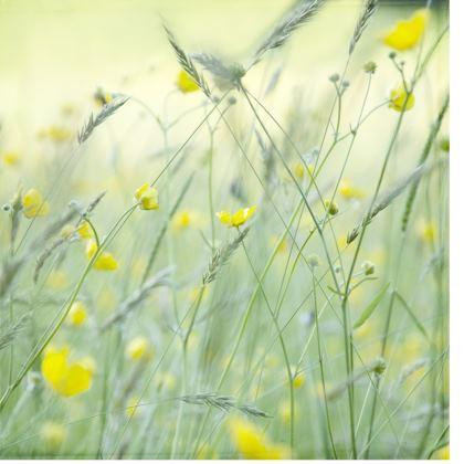 Deckchair in Buttercup Meadow Flower design