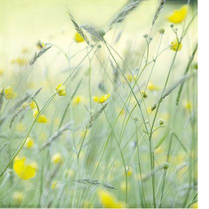 Double Deckchair in Buttercup Meadow Flower Design