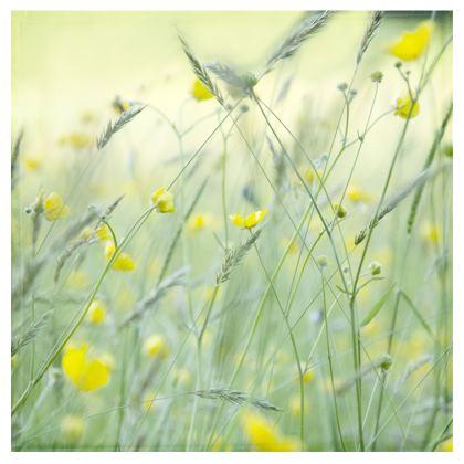 Bolster Cushion in Buttercup Meadow Flower Design.