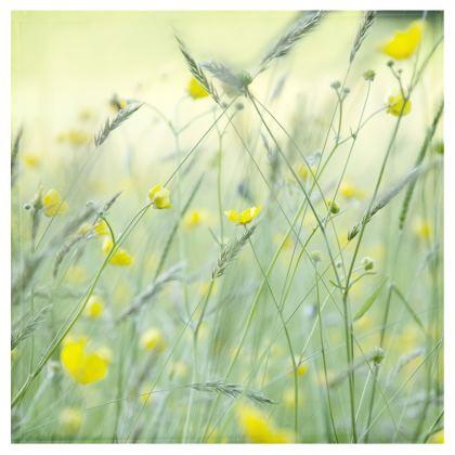Big Bolster Cushion in Buttercup Meadow Flower Design.
