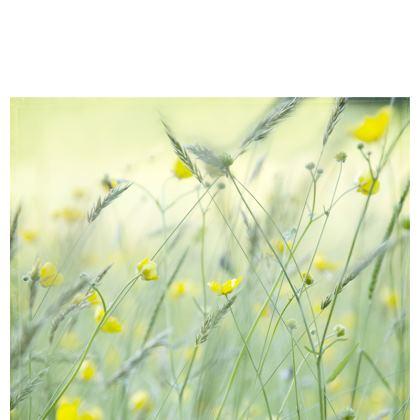 Table Runner in Buttercup Meadow Flower Design