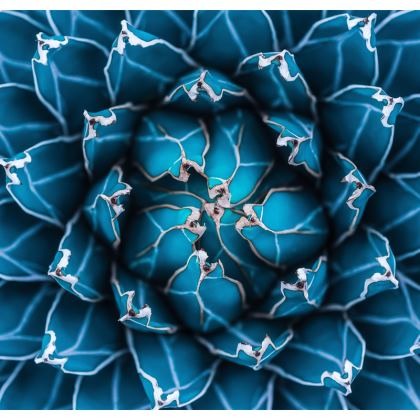 Drinks Coasters Agave Cactus