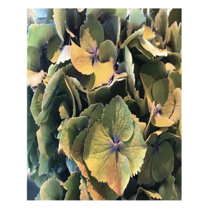 Trays - Hydrangea, Antique Colors