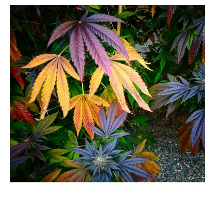 Dope Dress