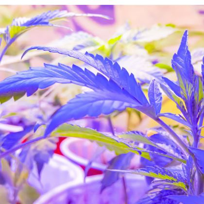 Dope Dress (short)