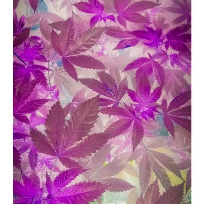 Pinks and Purps. Dope dress