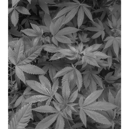 Black and grey Slip Dress (short)