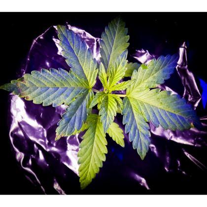 Plastic cannabis t-shirt