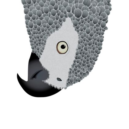 African Grey Parrot [WHITE] Coasters