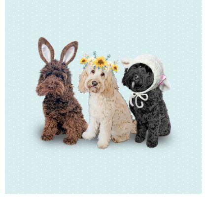 Beautiful cockapoo design cushion