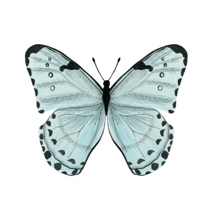 Beautiful Butterflies Set of Four Coasters by Lucinda Kidney