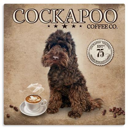 CHOCOLATE COCKAPOO COFFEE METAL PRINT