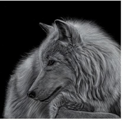 Winter is Coming - White Wolf Coasters
