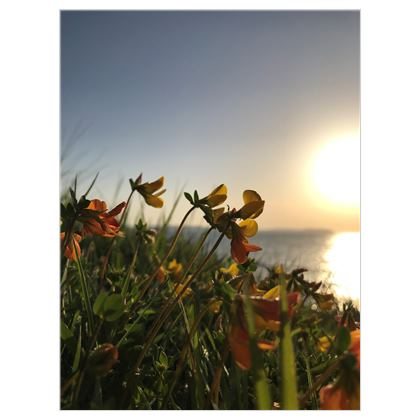 Bream Cove Flowers in the sunrise Canvas